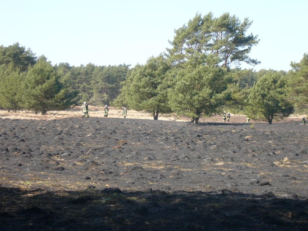 Die verbrannte Heide